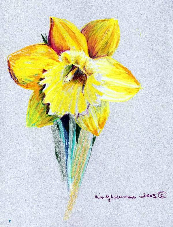Daffodil Poster featuring the drawing Daffodil by Mindy Newman