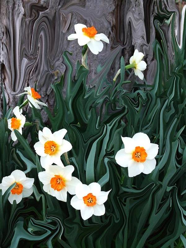 Flower Poster featuring the photograph Daffodills by Jim Darnall