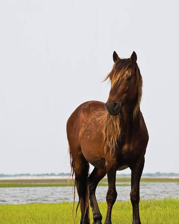 Wild Poster featuring the photograph Dark Stallion by Bob Decker