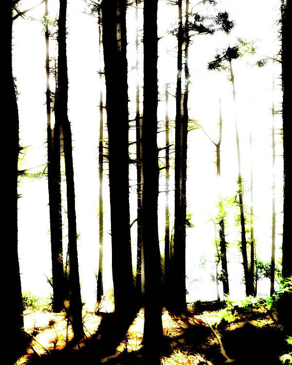 Bright Poster featuring the photograph Dawn in the woods by Corey O'Hara