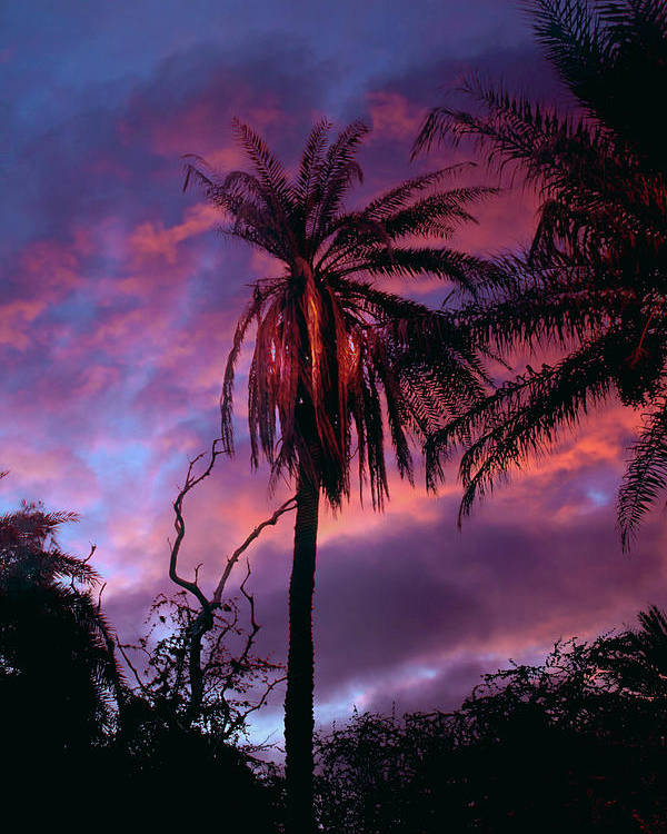 Landscape Poster featuring the photograph Dawn Palm 03 by Paulo Sabado