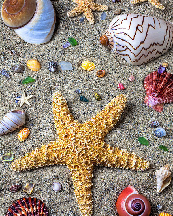 Starfish Poster featuring the photograph Day At The Beach by Garry Gay