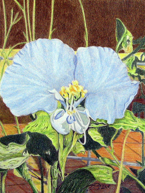 Fuqua - Artwork Poster featuring the drawing Day Flower by Beverly Fuqua