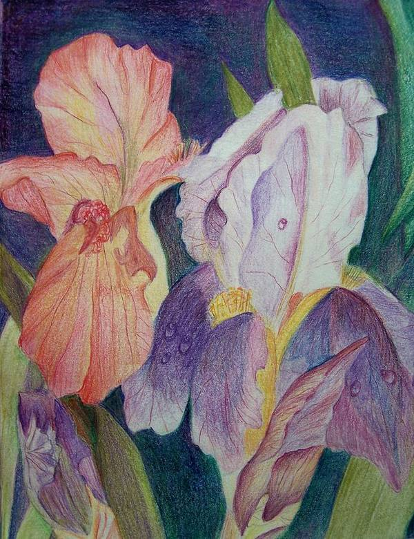 Iris Poster featuring the drawing Dear Iris by Vijay Sharon Govender