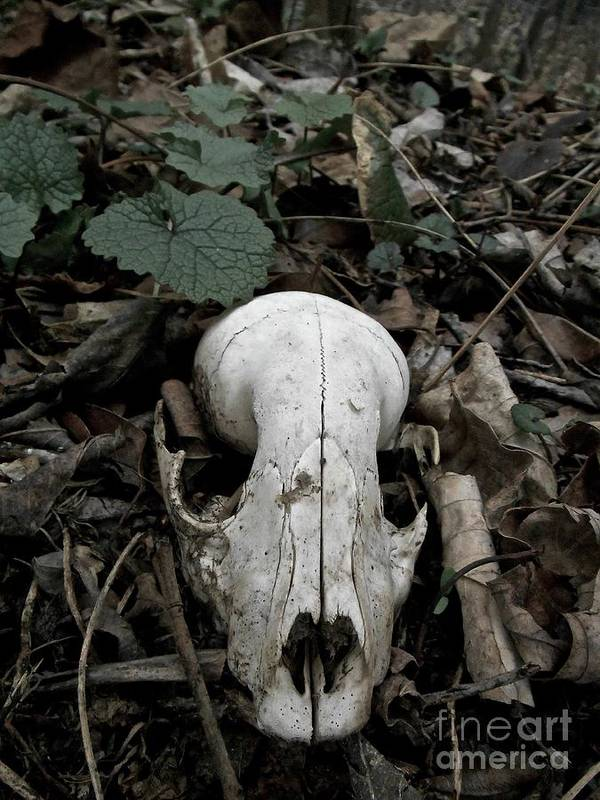 Skull Found Along The Trail. Poster featuring the photograph Death Over The Winter by Photography by Tiwago