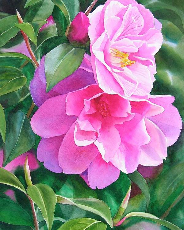 Pink Flower Poster featuring the painting Deep Pink Camellias by Sharon Freeman