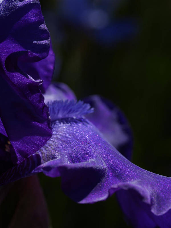 Macrophotography Poster featuring the photograph Deep Sparkling Iris by Joyce Hutchinson