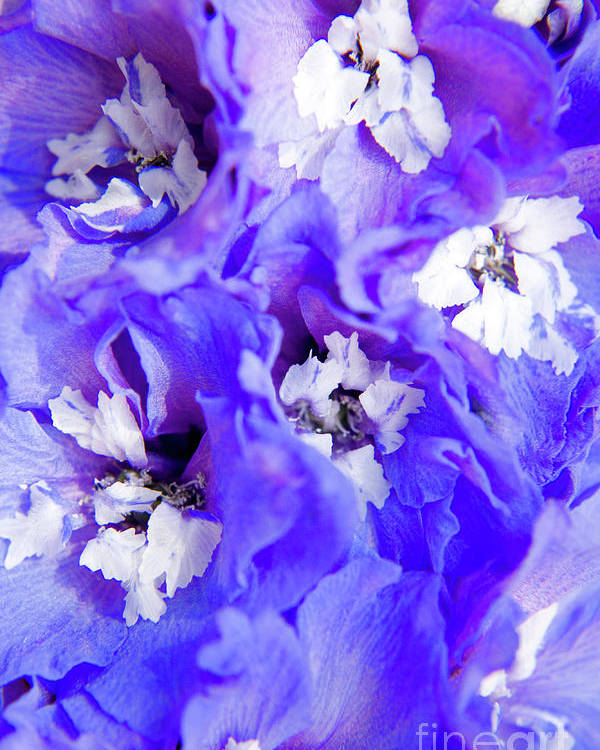 Nature Poster featuring the photograph Delphinium Flowers by Julia Hiebaum