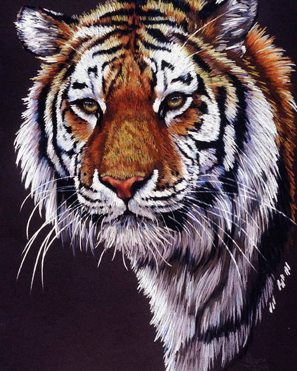 Tiger Poster featuring the drawing Desperado by Barbara Keith