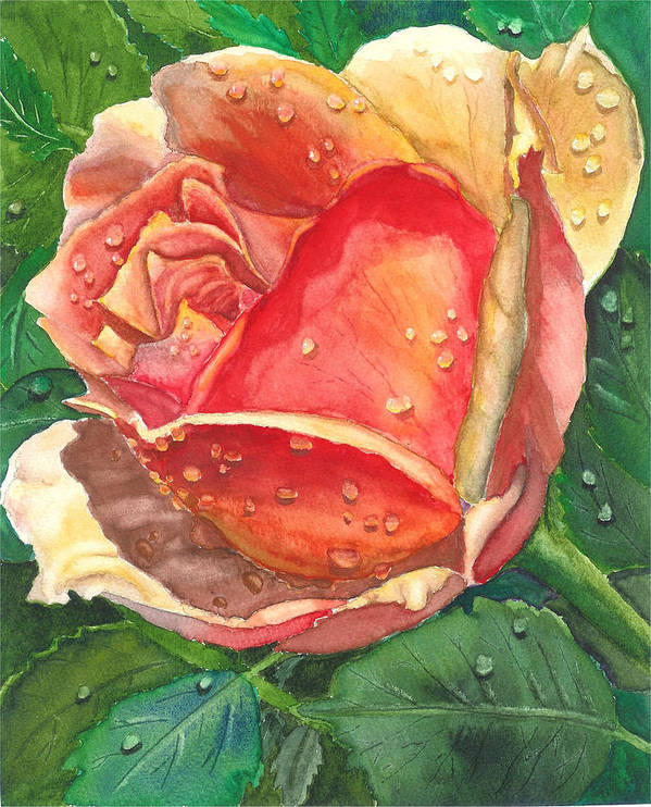 Floral Poster featuring the painting Dew Drop Rose by Robert Thomaston