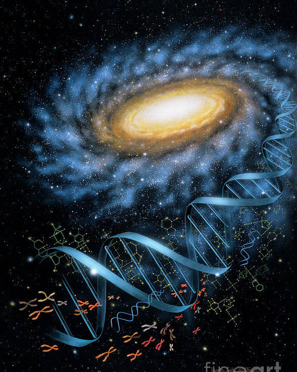 Lynette Cook Poster featuring the painting Dna Galaxy by Lynette Cook