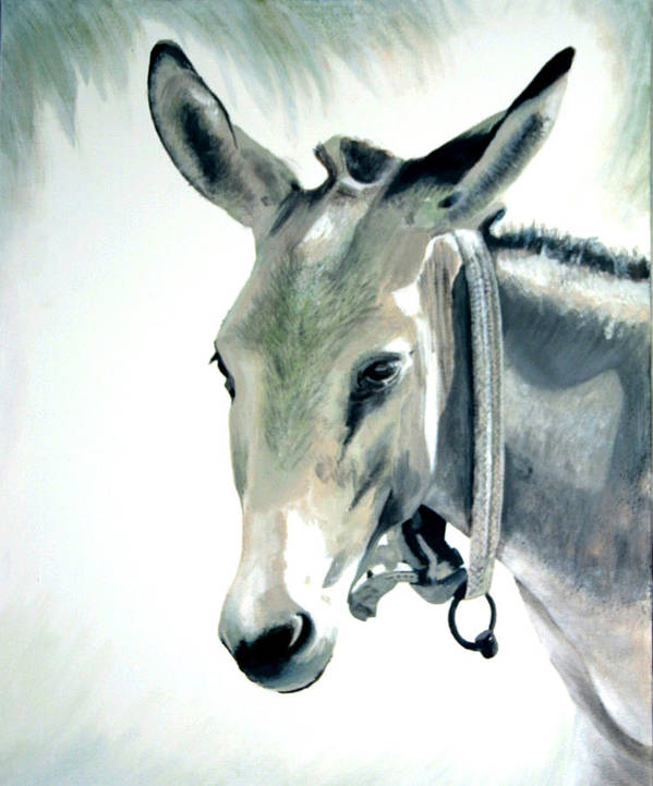 Donkey Poster featuring the painting Donkey by Fiona Jack