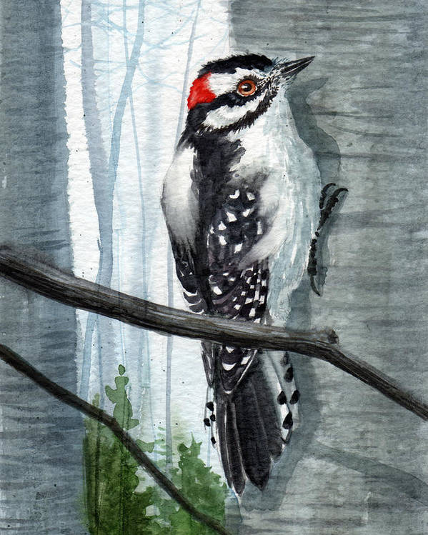 Birds Poster featuring the painting Downey Woodpecker by Sean Seal