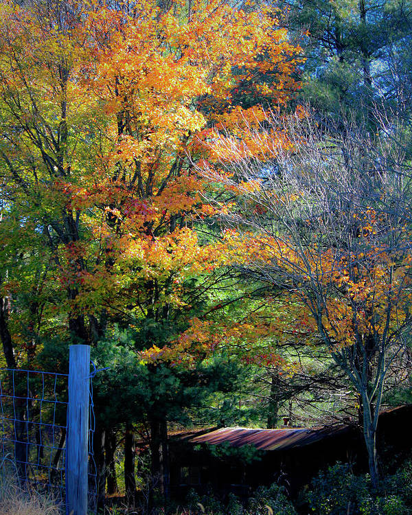Fall Poster featuring the photograph Dreamy Fall Scene by Teresa Mucha