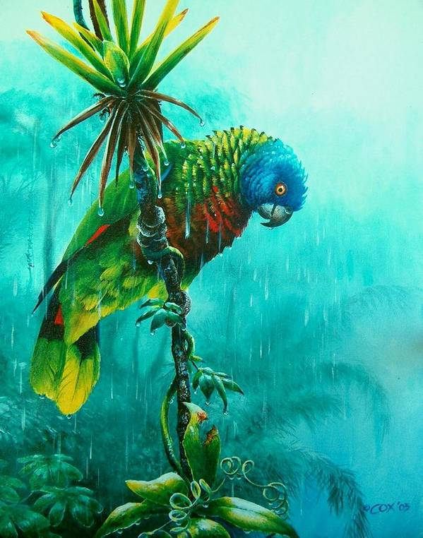 Chris Cox Poster featuring the painting Drenched - St. Lucia Parrot by Christopher Cox