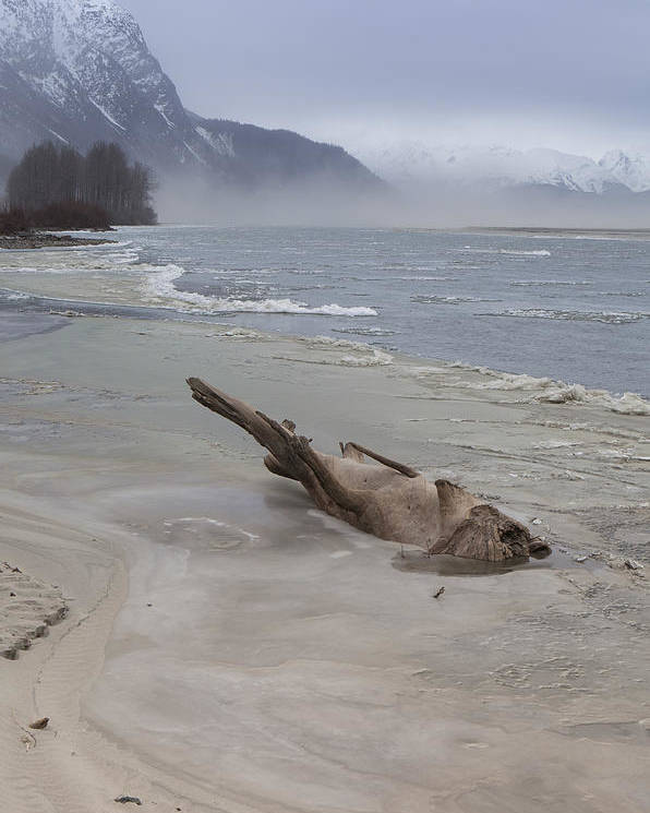 Alaska Poster featuring the photograph Driftwood Animal by Michele Cornelius