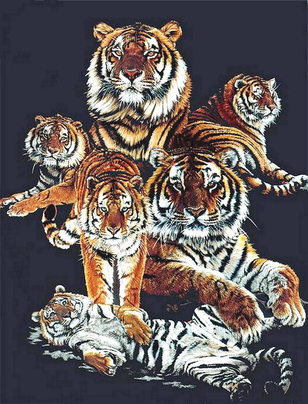 Tiger Poster featuring the drawing Dynasty by Barbara Keith