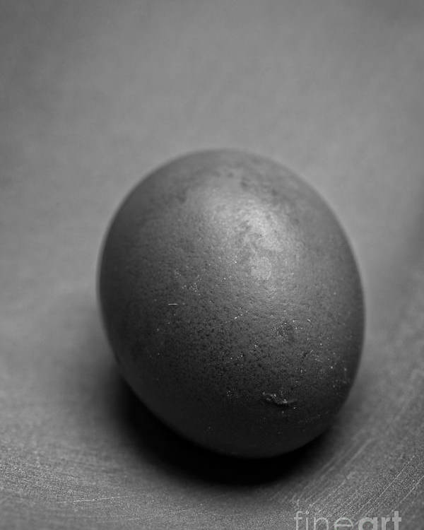 Still Poster featuring the photograph Egg Black And White by Edward Fielding