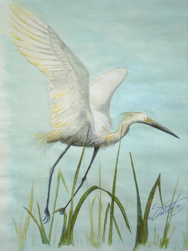 Bird Poster featuring the painting Egret In Flight by Dennis Vebert
