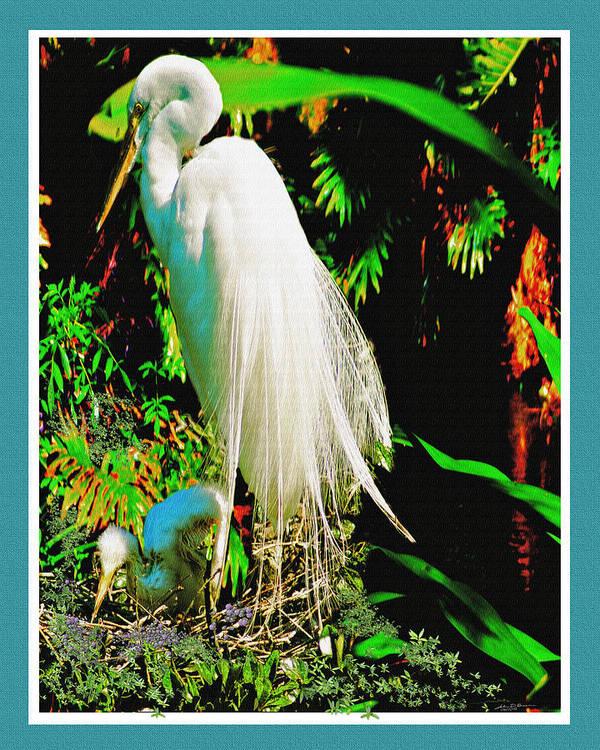 Florida Birds Egret Snow White Egret Poster featuring the digital art Egret3 by John Breen