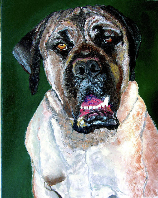 Dog Portrait Poster featuring the painting Ely by Stan Hamilton