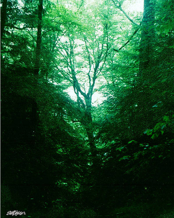 Emerald Poster featuring the photograph Emerald Glade by Seth Weaver