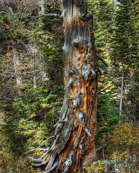 Nature Poster featuring the photograph Enchanted Tree by Pete Hellmann