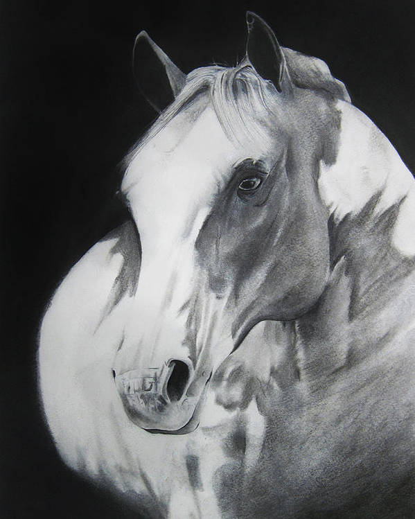 Horse Poster featuring the drawing Equestrian Beauty by Carrie Jackson