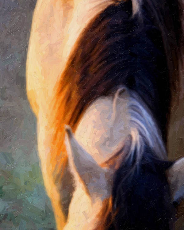 Equine Poster featuring the photograph Equine Glow by Nick Sokoloff