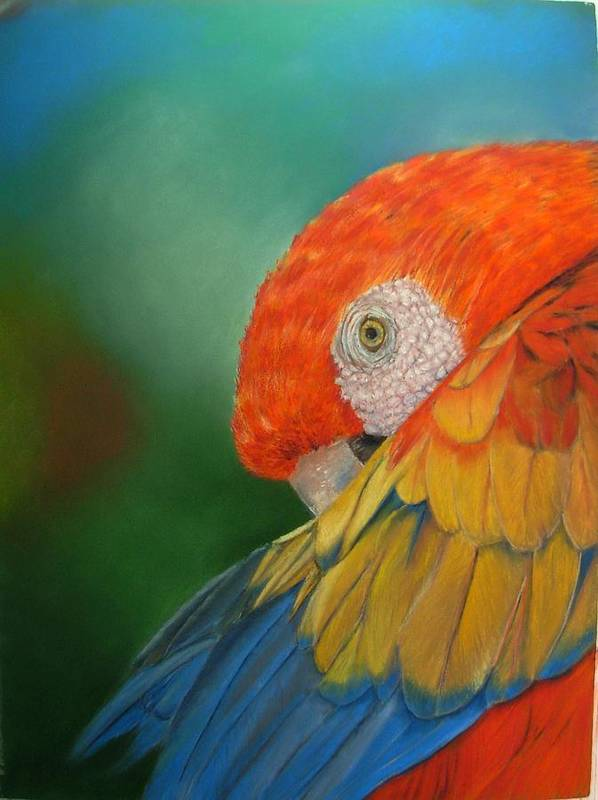 Bird Poster featuring the painting Escondida by Ceci Watson