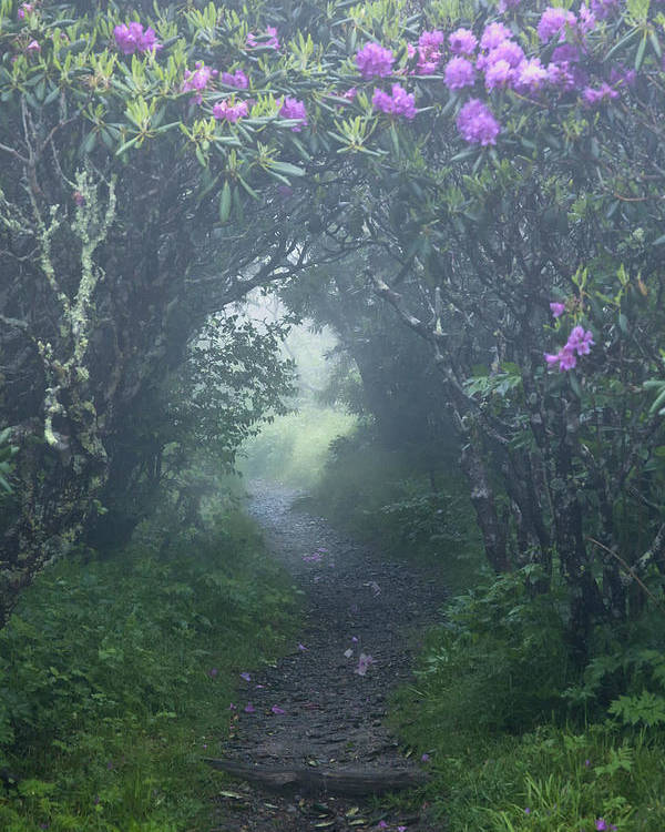 Fairy Path Poster featuring the photograph Fairy Path by Rob Travis