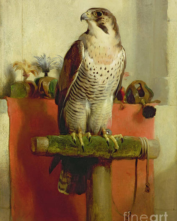 Falcon Poster featuring the painting Falcon by Sir Edwin Landseer