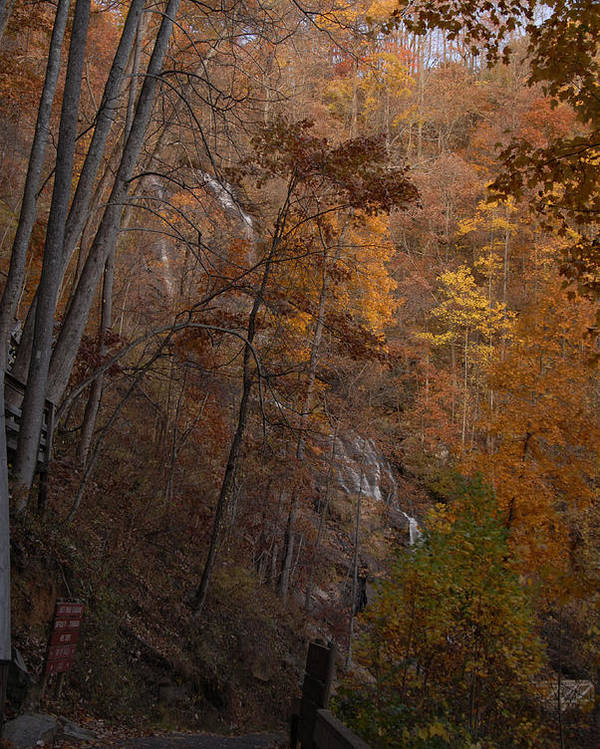 Fall Color Photo Poster featuring the photograph Fall At Amicalola Falls by Gregory Colvin