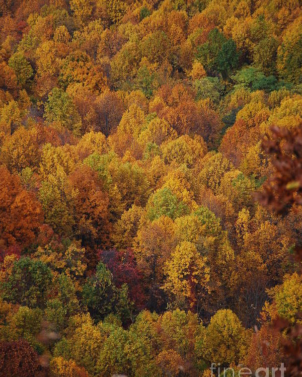 Fall Poster featuring the photograph Fall Cluster by Eric Liller