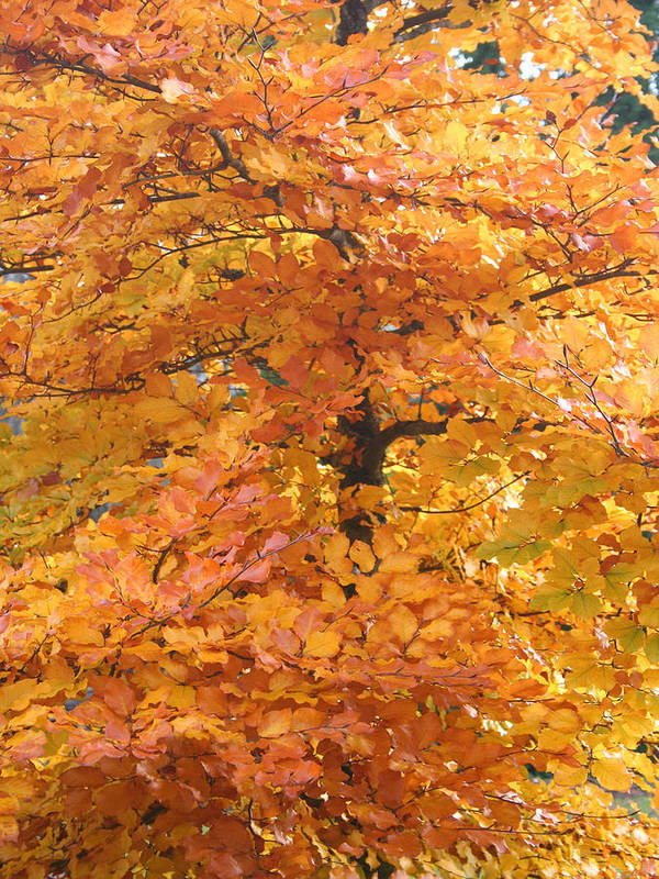 Fall Poster featuring the photograph Fall Colors by Mary Gaines