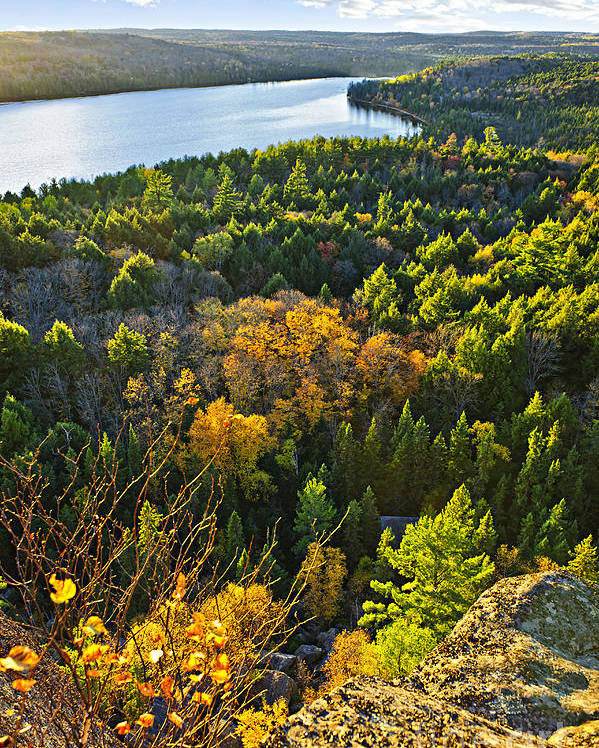 Forest Poster featuring the photograph Fall Forest And Lake Top View by Elena Elisseeva