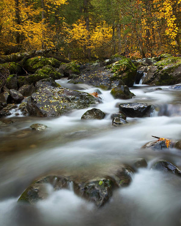 Stream Poster featuring the photograph Fall Surge by Mike Dawson