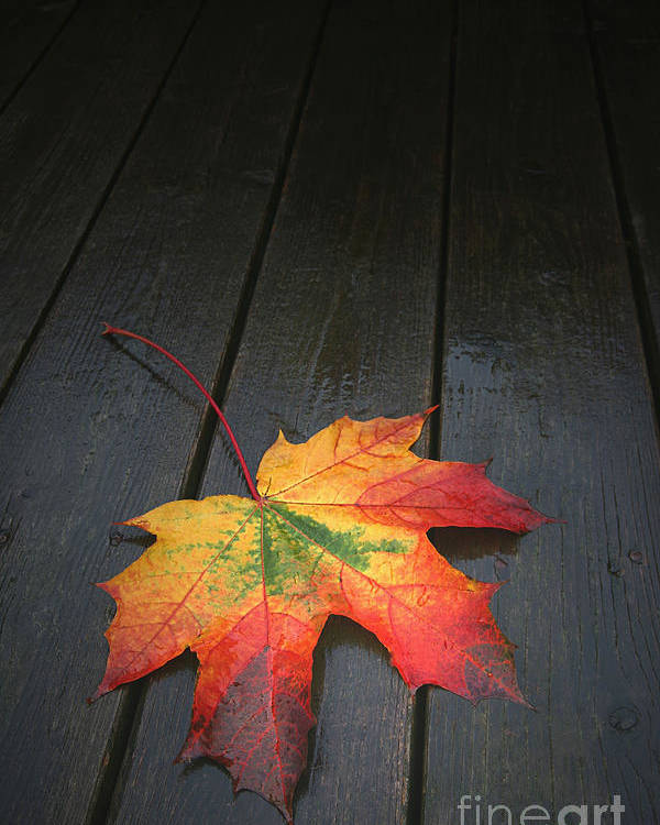 Leaf Autumn Fall Rain Color Poster featuring the photograph Fall by Winston Rockwell