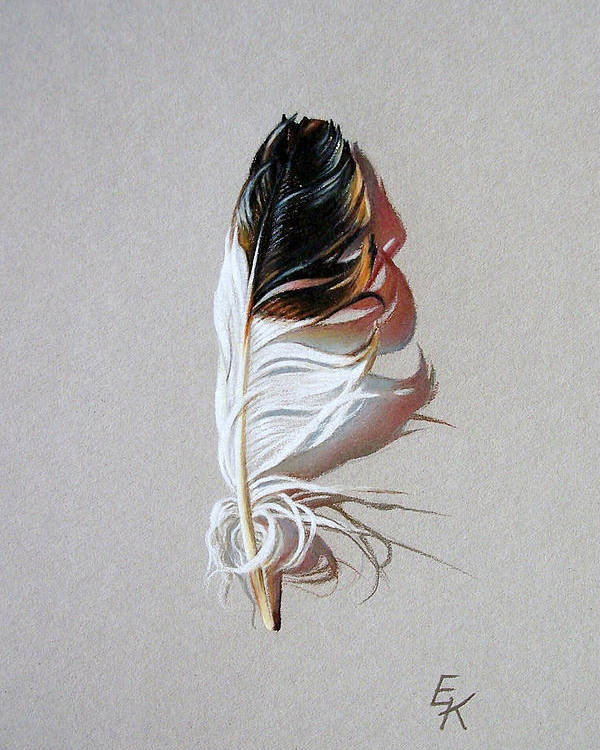 Still Life Feather Poster featuring the drawing Feather And Shadow 3 by Elena Kolotusha