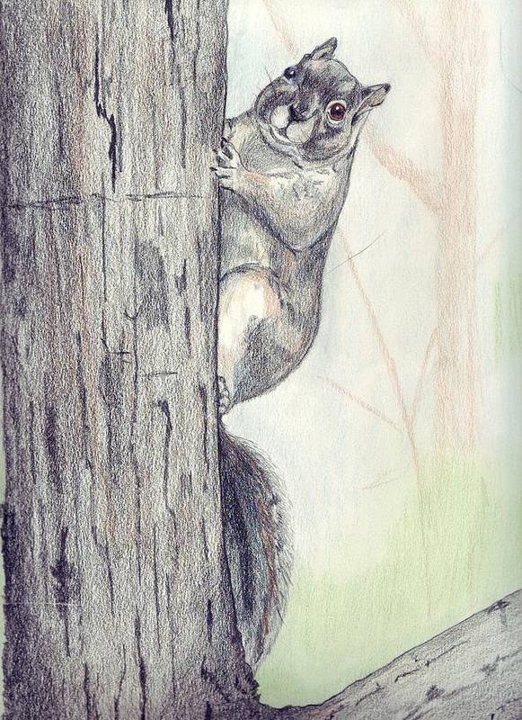 Color Pencil Poster featuring the drawing Feeder Raider by Debra Sandstrom