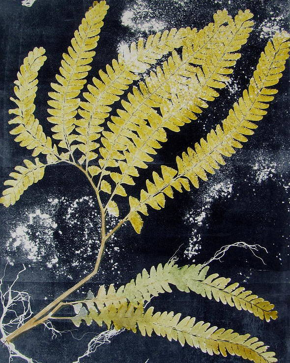 Fern Poster featuring the painting Fern Monoprint by Brenda Alcorn