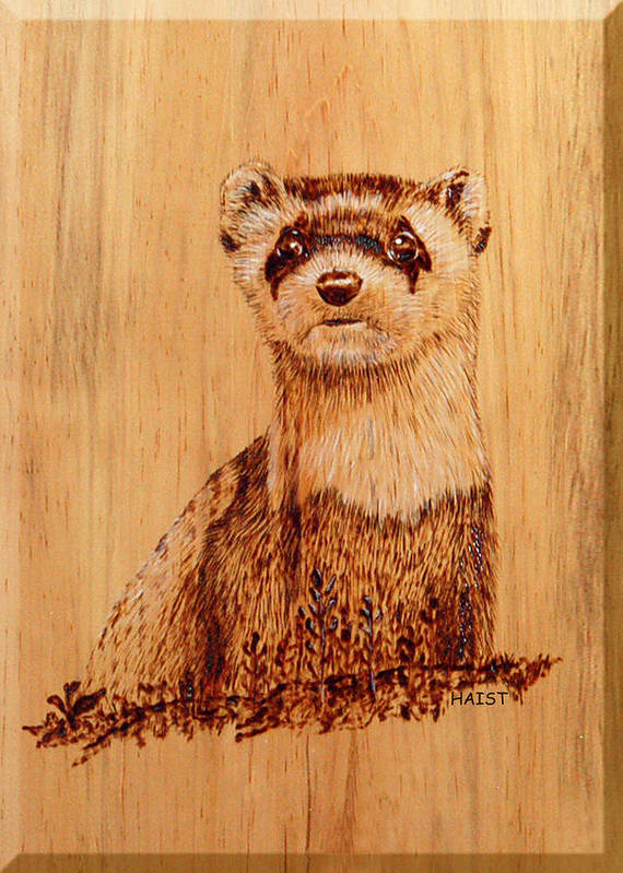 Wild Poster featuring the pyrography Ferret by Ron Haist