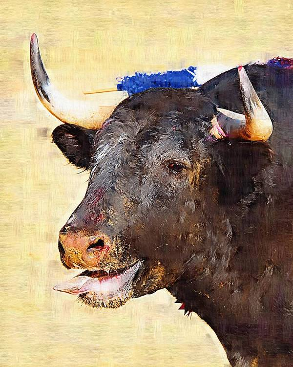 Matador Poster featuring the photograph Fighting Bull by Clarence Alford