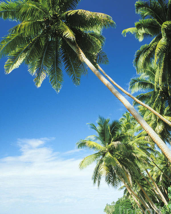 Beach Poster featuring the photograph Fiji, Vanua Levu by Peter Stone - Printscapes