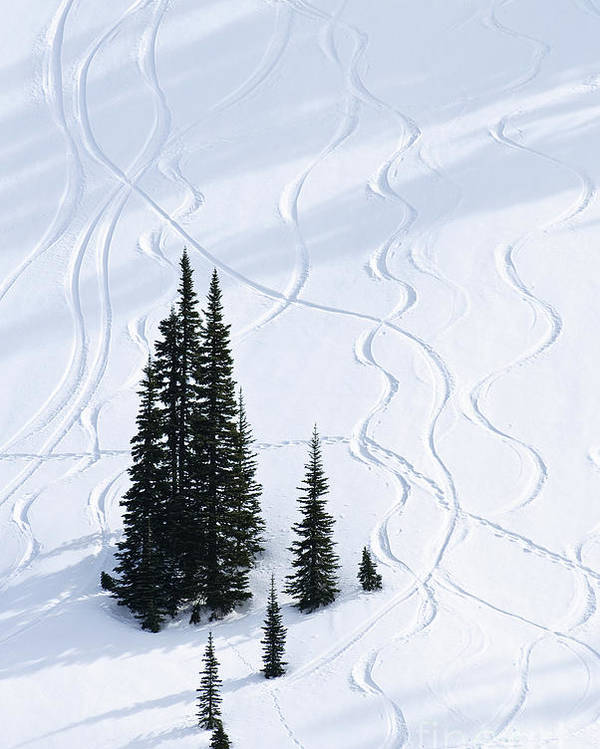 America Poster featuring the photograph Fir And Snow by Greg Vaughn - Printscapes
