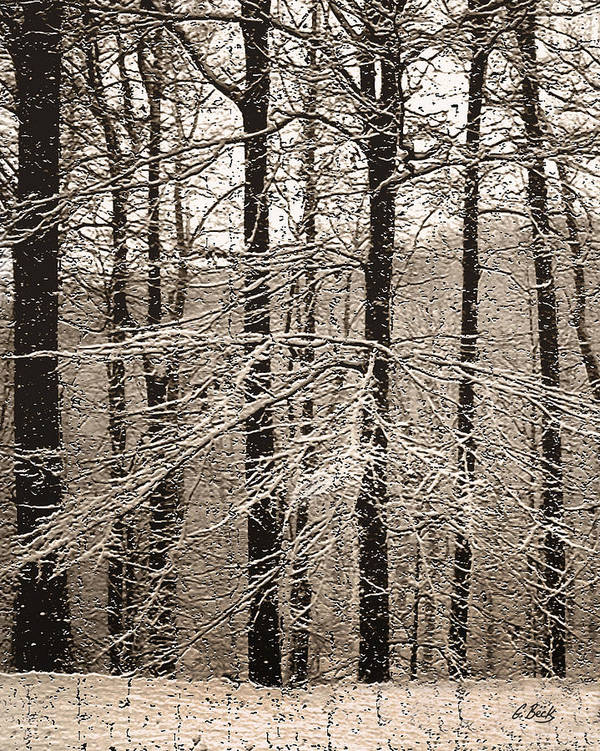 Winter Landscape Oak Trees Snow Snowy Forest Rural Country Woods Gordon Beck Art Poster featuring the photograph First Snow by Gordon Beck