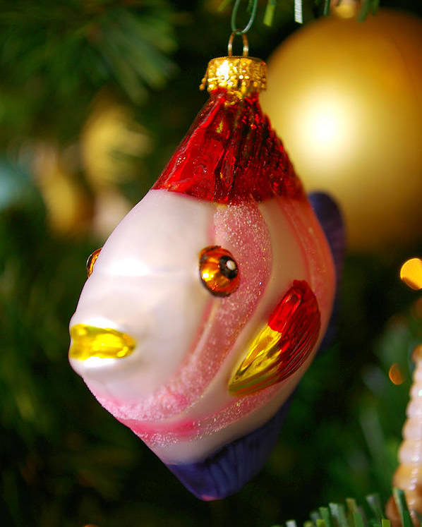 Christmas Celebration Pine Tree Ornaments Fish Cute Pink Red Green Xmas Happy Holidays Memories Family Time Poster featuring the photograph Fishy Ornament by Jera Sky