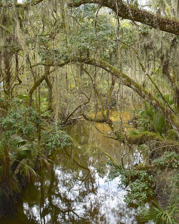 River Poster featuring the photograph Florida Jungle by Carol Bradley
