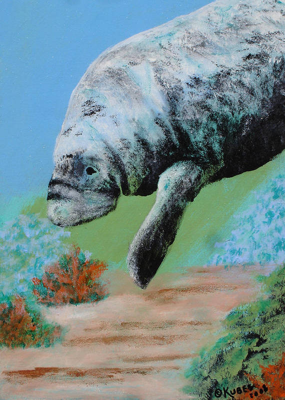 Florida Poster featuring the painting Florida Manatee by Susan Kubes