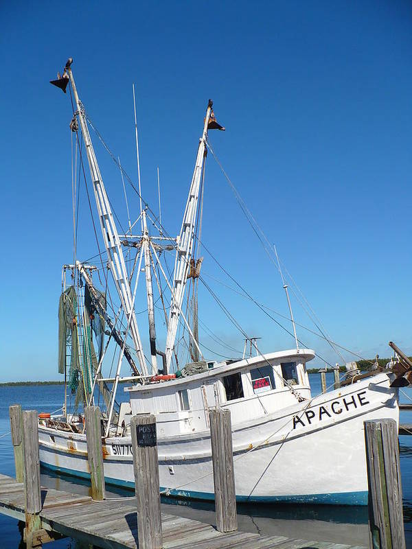 Boat Poster featuring the photograph Florida Shrimper by Florene Welebny